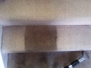 Carpet Cleaning Hucknall Nice N`Clean
